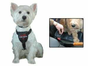 Hondenautogordel Clix Car Safe XS