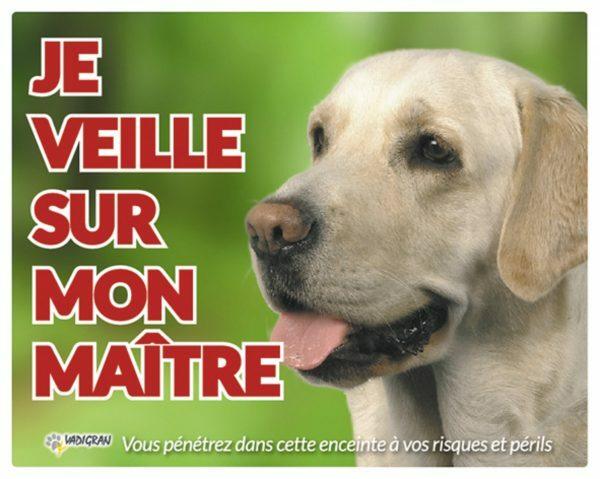 Waakbord foto hond Labrador FR