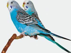 3D Wenskaart Parakeet on tree