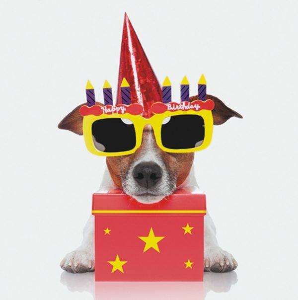 3D Wenskaart Birthday dog