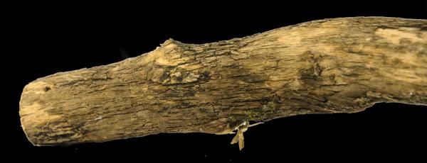 Birrdeeez Natural Sekelbos Perch 30cm