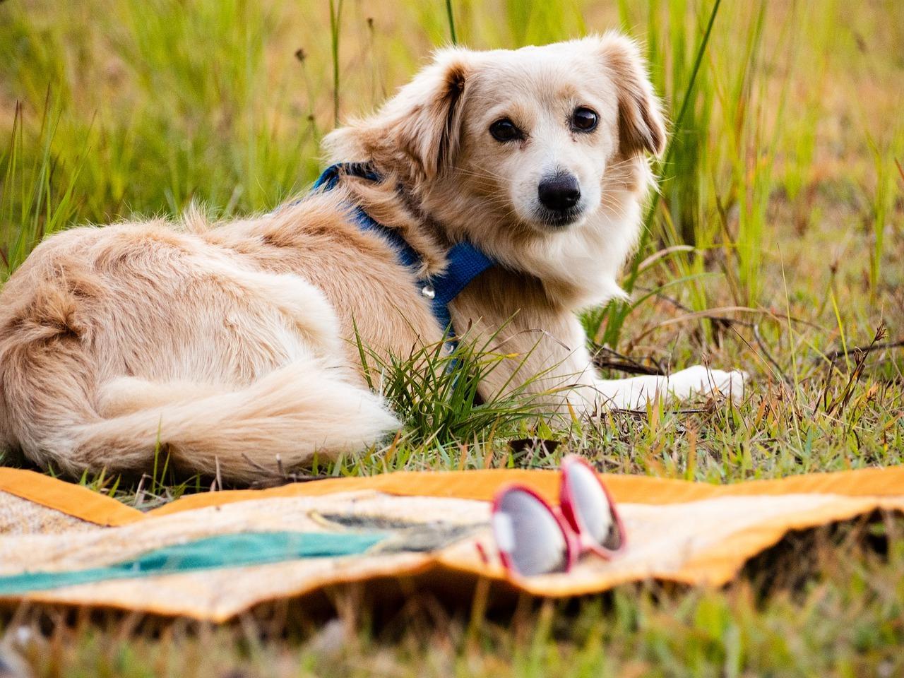 Alles voor honden bij dierenspeciaalzaak Bopets