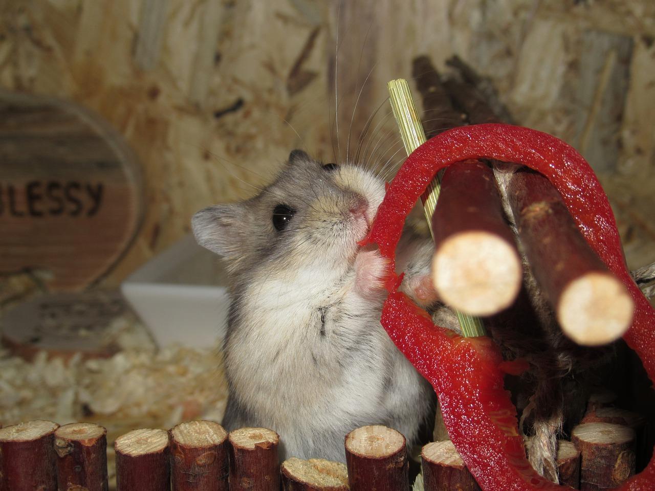 maak je hamster gelukkig en doe mee met hamsterscaping