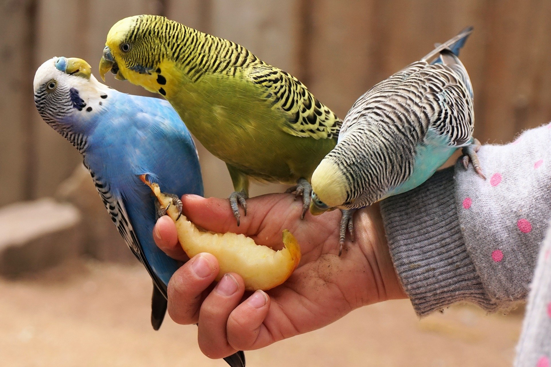 Vogelvoer en zadenmixen voor alle vogels