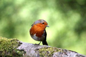 Vogelvoer voor tuinvogels